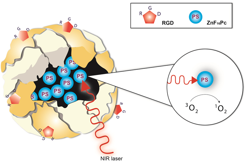 ferritin-based nanoplatforms for imaging and drug delivery | xie, Skeleton